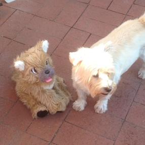 Basil and Gobi